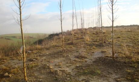 Restauración ambiental-Esparza de Galar.