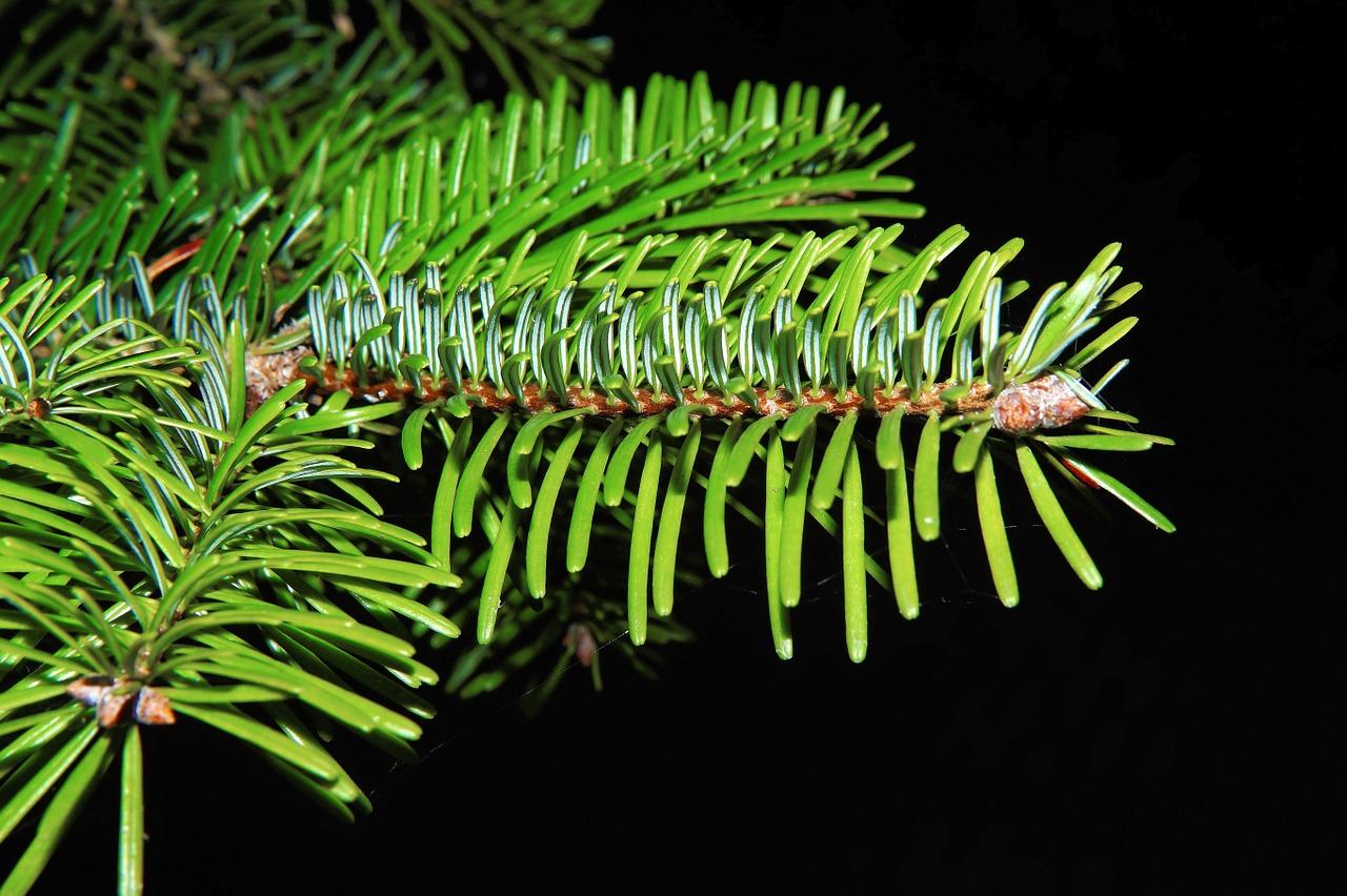 ¿Conoces la endoterapia vegetal a baja presión?