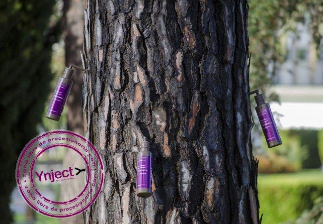 Es época de prevenir la procesionaria del pino