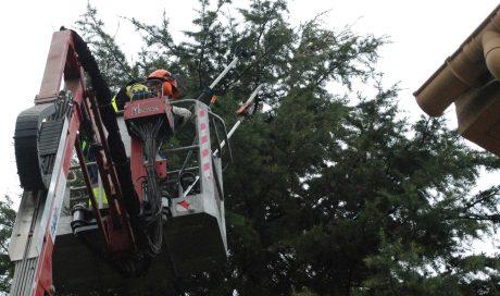 Retirada de nidos de procesionaria en Pamplona